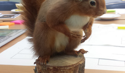 Red Squirrel iDoc Update